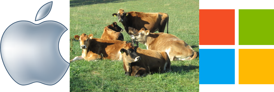 ms_apple_cows-dec2012